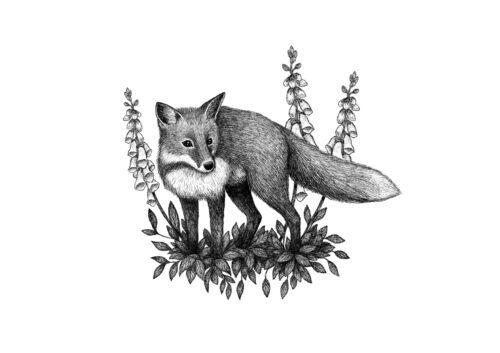 Fox and Foxgloves