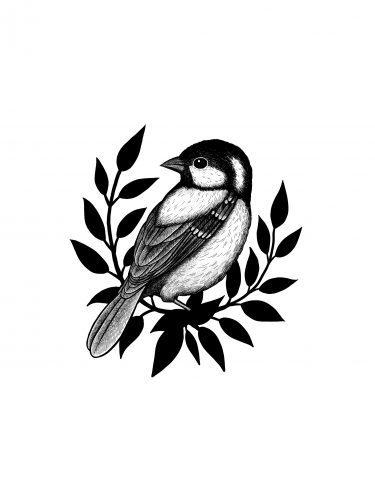 Bird logo concept