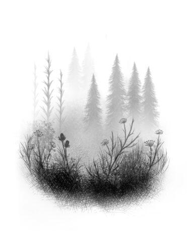 Misty Glade