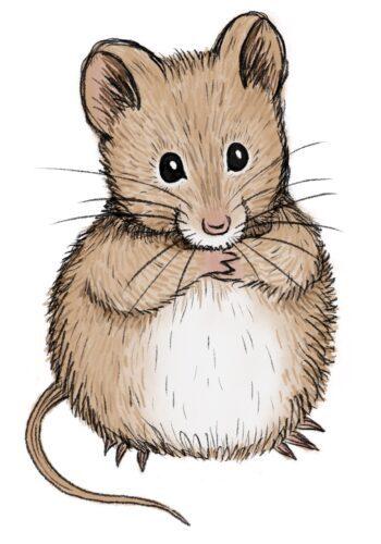 Nettlefold Mouse