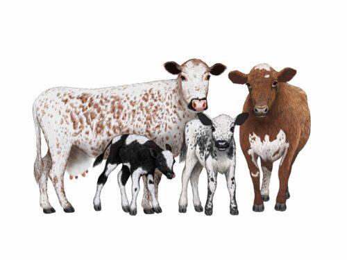 Cow Portraits